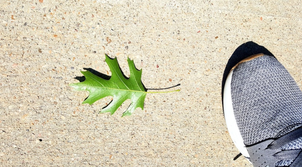 Green leaf and shoe on concrete.